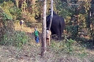 Topslip Elephant Camp